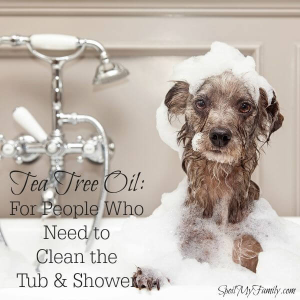 Use Tea Tree Oil as part of this great mixture to easily and safely clean your shower and tub. www.themidlifemamas.com #greencleaning #teatreeoil #essentialoils #cleanwithessentialoils