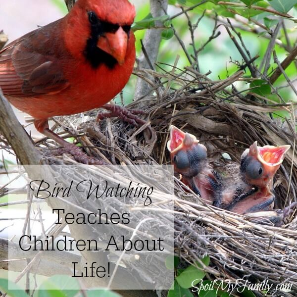 Bird watching can be an amazing lifetime hobby and it's perfect to start when your children are young. Young children are naturally curious and are sponges for knowledge. They love animals and so it just seems like a perfect fit! You can make bird watching fun in so many ways. There's nothing more amazing than being able to watch a bird caring for their babies in the spring! www.themidlifemamas.com #birdwatching #familytraditions